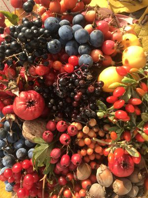 Wild fruit young plants and specialities –  A niche assortment with a future